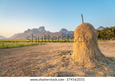collected hay on a sunflower field in foothills - stock photo