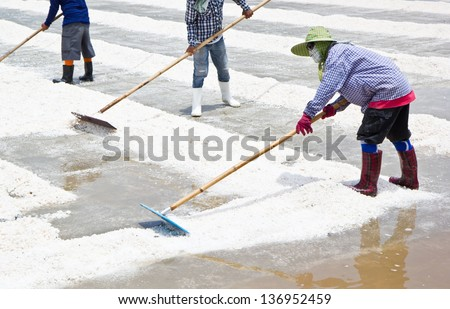 collecting in salt farm in Thailand