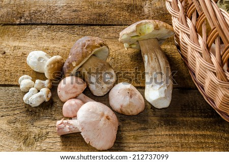 Collecting mushrooms with cupcake on natural wood