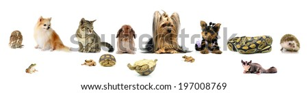 collection animal isolated on white background - stock photo