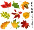 collection beautiful colorful autumn leaves close up isolated on white background - stock photo