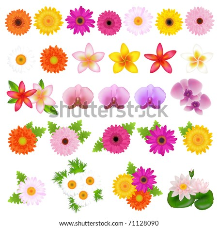 Collection Beautiful Flowers, Isolated On White Background - stock photo