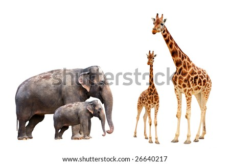 Collection biggest african mammals - stock photo
