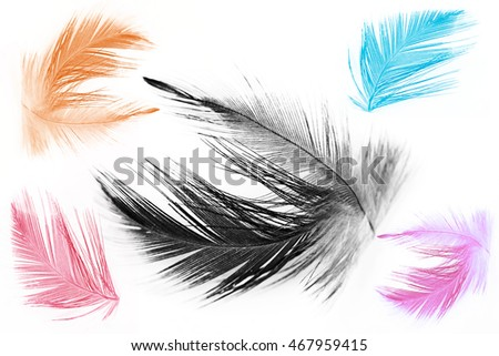 Collection color trends chicken feather texture background