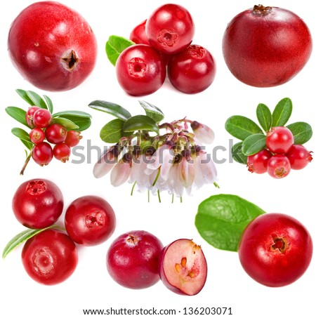 collection cranberries and cowberries close up  isolated on white background - stock photo