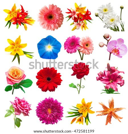 Collection flowers isolated on white background. Floristics, bouquets, wedding gift. Flat lay, top view. Valentine's Day, love. Flowers roses, chrysanthemums, phlox, orchids, morning glory, gerbera