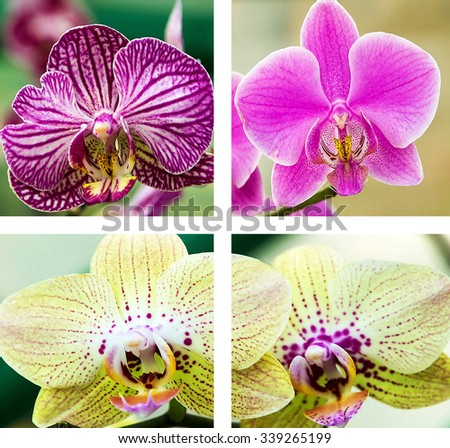 collection flowers orchids background nature