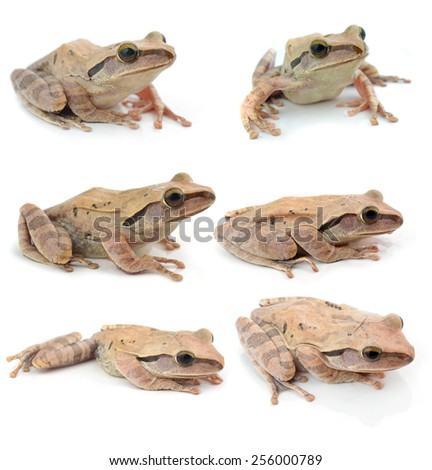 collection frog   on white background - stock photo