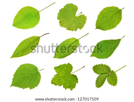Collection fruit leaves isolated on white - stock photo