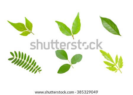 Collection green leaf isolate on white background - stock photo
