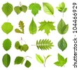 Collection green tree leaves, high resolution, isolated on white background - stock photo
