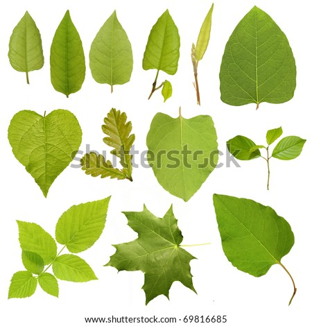Collection green tree leaves, high resolution isolated on white background - stock photo