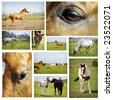 Collection horses - stock photo
