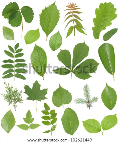 Collection leaves - stock photo