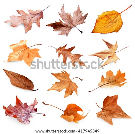 Collection of autumn dried leaves, isolated on white - stock photo