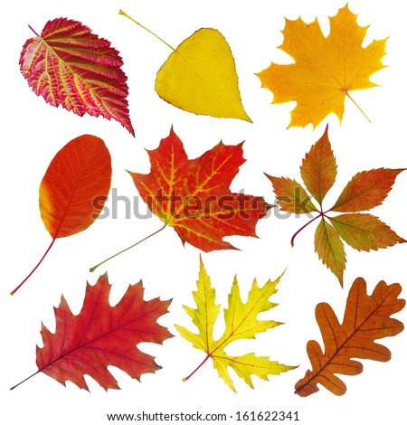 Collection of autumn leaves. Isolated on white - stock photo