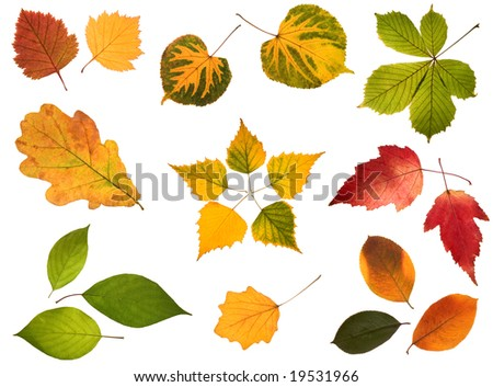 Collection of autumn leaves isolated on white background - stock photo