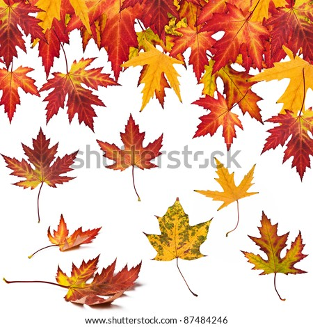 collection of autumn leaves to your design - stock photo