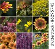 collection of autumnal flowers - stock photo