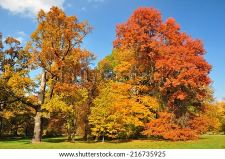 Collection of beautiful colorful autumn trees with leaves in yellow, orange and red