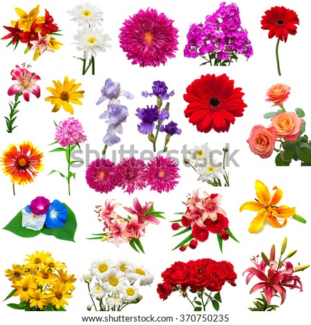 Collection of beautiful colorful flowers isolated on white background