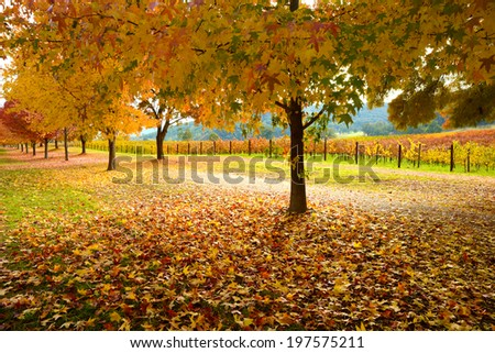 Collection of Beautiful Golden Autumn landscape - stock photo