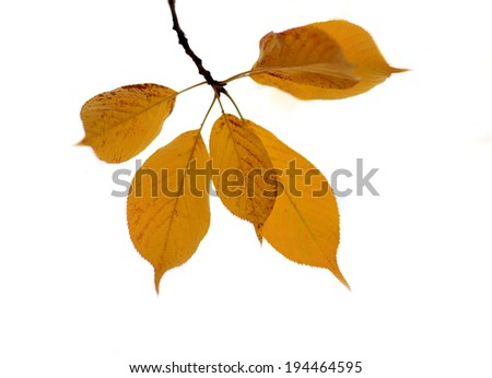 Collection of Beautiful Golden Autumn Leaves - stock photo