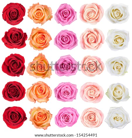 Collection of beautiful roses, isolated on the white background. - stock photo