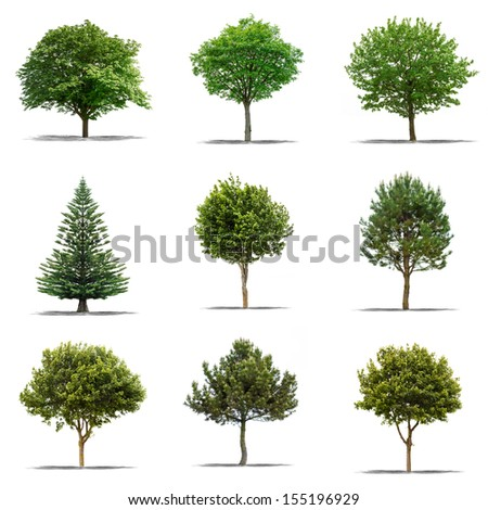 Collection of Beautifull green tree on a white background in high definition  - stock photo