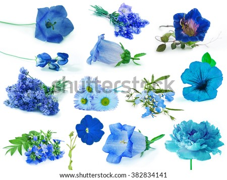 Collection of blue flowers isolated on white background - stock photo