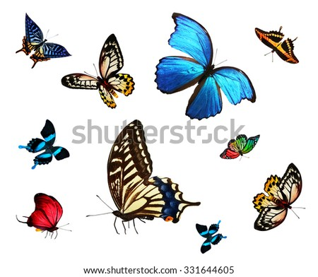 Collection of bright tropical butterflies, isolated on white - stock photo