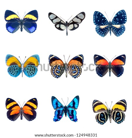 collection of Butterflies on a white background - stock photo