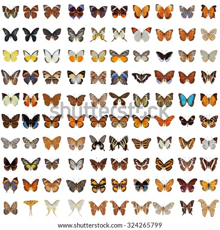 Collection of 100 butterfly and moth isolated on white background - stock photo
