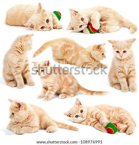 collection of cat kitten isolated on white background - stock photo