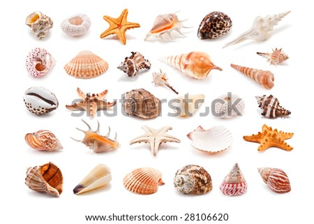Collection of cockleshell isolated on white - stock photo