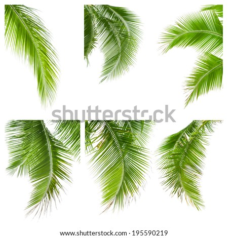 collection of coconut leaves isolated on white background, clipping path included - stock photo