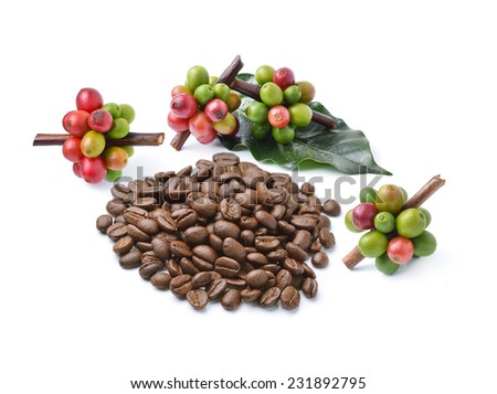 Collection of Coffee beans isolated on white background - stock photo