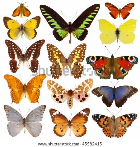 Collection of colored butterflies isolated on white - stock photo