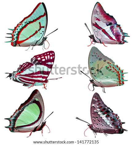 Collection of colorful butterflies isolated on white - stock photo