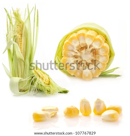 Collection of corn isolated on white background - stock photo