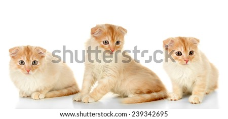 Collection of cute kitten isolated on white - stock photo