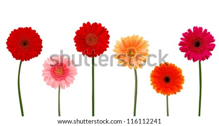 Collection of daisy flower on white background. - stock photo