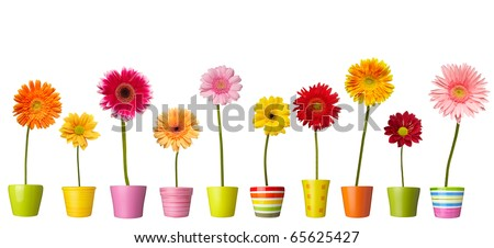 collection of  daisy flower on white background. each one is shot separately