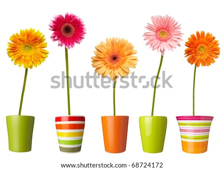 collection of  daisy flower on white background. each one is shot separately - stock photo