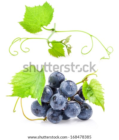 Collection of Dark grapes with leaves, Isolated on white background - stock photo