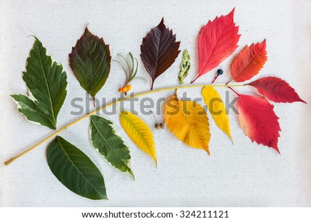 Collection of different autumn leaves on a light fabric background compose in a branch - stock photo