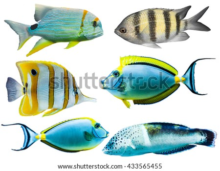 Collection of different colorful tropical aquarium fish isolated on white background - stock photo