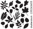 Collection of different leaves silhouettes isolated on white. Raster version. - stock photo
