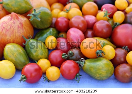 Collection of different tomato varieties. Various shapes and colors home grown heirloom tomatoes on the blue wooden table.