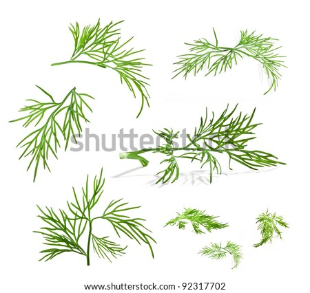 Collection of dill with a light shadows isolated on white background, closeup - stock photo